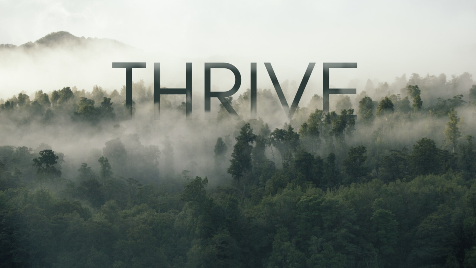 Thrive - We Were Made for More
